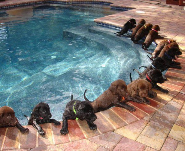 clínica, veterinaria.sabuesos. perros. gatos. exóticos, veterinario,candelaria, mascota